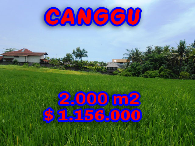 Land for sale in Bali Indonesia, Outstanding Rice fields view  in Canggu Pererenan – TJCG093