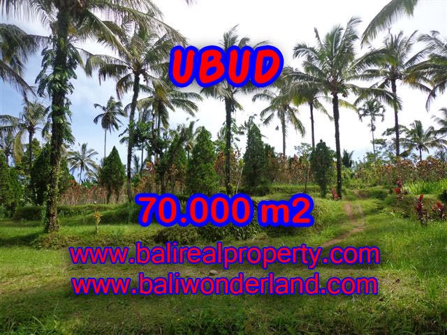 Stunning Land for sale in Bali, mountain and paddy view by the river in Ubud Bali - TJUB358