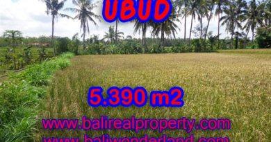 Amazing Land in Bali for sale in Ubud Mas Bali – TJUB342
