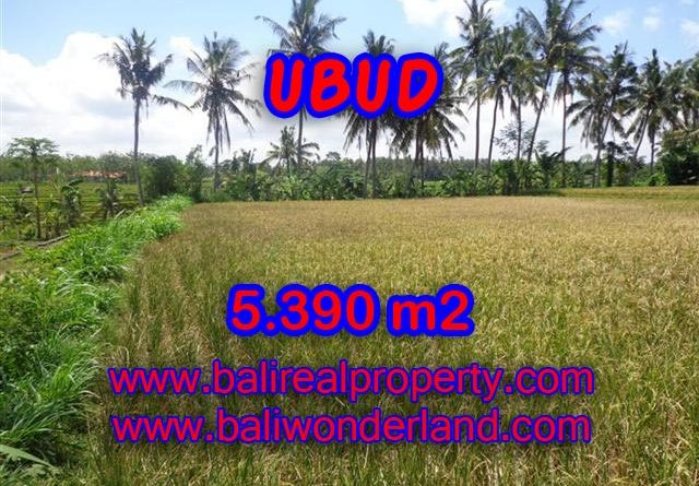 Amazing Land in Bali for sale in Ubud Mas Bali – TJUB342