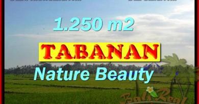 Wonderful Property in Bali for sale, land in Tabanan Bali for sale – TJTB148