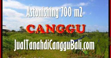 Affordable PROPERTY 700 m2 LAND IN CANGGU FOR SALE TJCG155