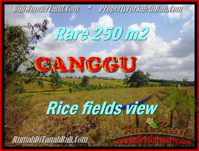 Beautiful PROPERTY 250 m2 LAND SALE IN CANGGU TJCG164