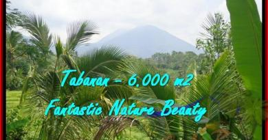 Exotic LAND IN Tabanan Penebel BALI FOR SALE TJTB182