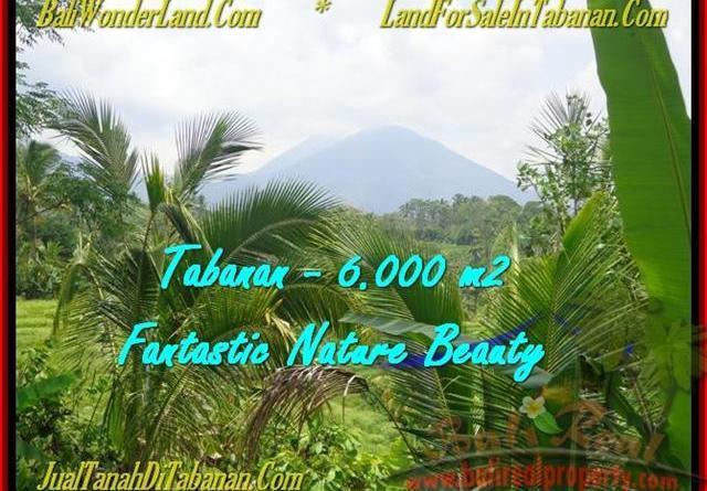 Exotic LAND IN Tabanan Penebel BALI FOR SALE TJTB182