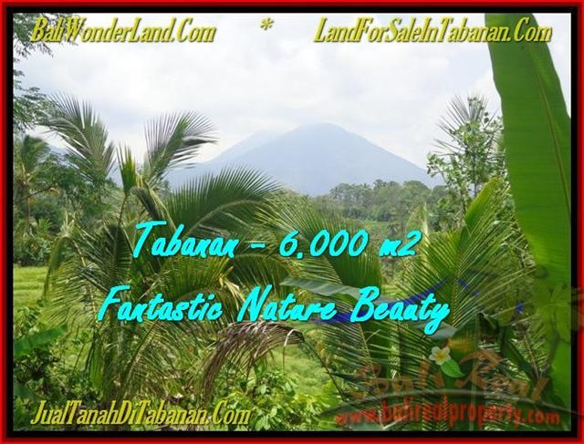 FOR SALE Beautiful PROPERTY 6.000 m2 LAND IN TABANAN BALI TJTB182