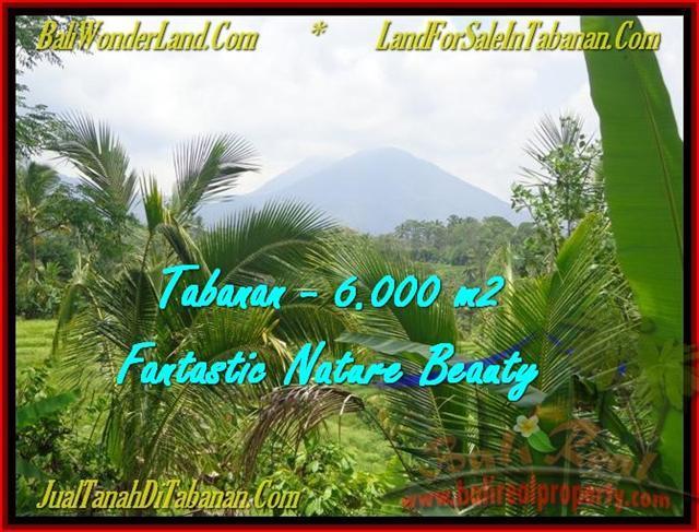 FOR SALE Beautiful PROPERTY 6.000 m2 LAND IN TABANAN BALI TJTB182