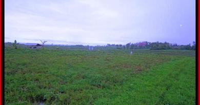 FOR SALE LAND IN Tabanan Selemadeg TJTB184