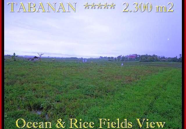 FOR SALE LAND IN Tabanan Selemadeg TJTB184