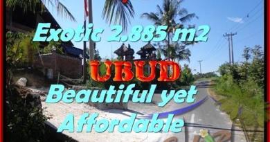LAND SALE IN Ubud Pejeng TJUB442