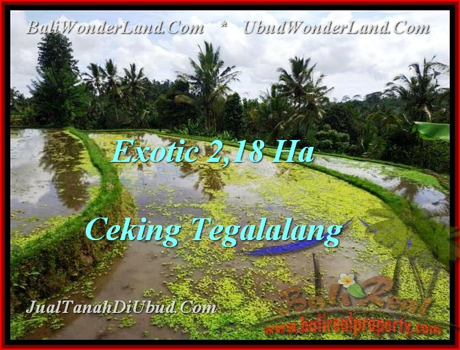 Affordable 21,800 m2 LAND IN UBUD FOR SALE TJUB471