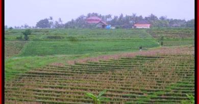 LAND IN Tabanan Selemadeg BALI FOR SALE TJTB185
