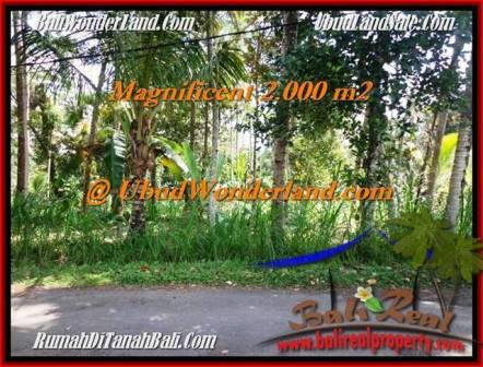 FOR SALE 2,000 m2 LAND IN UBUD TJUB506