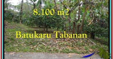 Affordable 8.100 m2 LAND FOR SALE IN TABANAN BALI TJTB212