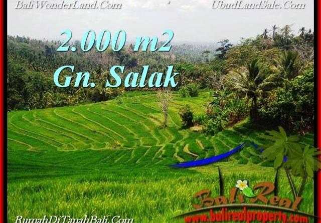 Affordable LAND SALE IN Tabanan Selemadeg BALI TJTB220