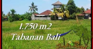 Affordable LAND SALE IN Tabanan Selemadeg BALI TJTB231