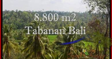 Beautiful 8,800 m2 LAND SALE IN TABANAN BALI TJTB238
