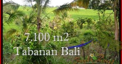 Magnificent PROPERTY 7,100 m2 LAND IN Tabanan Selemadeg FOR SALE TJTB240