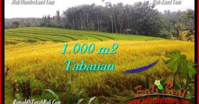 Beautiful PROPERTY LAND SALE IN TABANAN TJTB273