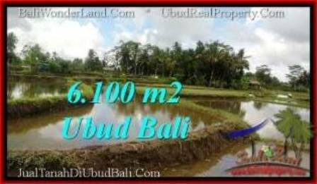 Magnificent 6,100 m2 LAND IN Ubud Pejeng FOR SALE TJUB547