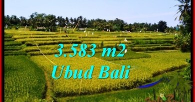 Affordable PROPERTY Ubud Pejeng 3,583 m2 LAND FOR SALE TJUB542