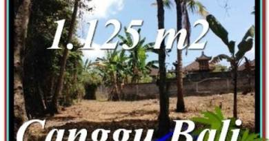 Affordable PROPERTY Canggu Pererenan BALI LAND FOR SALE TJCG208