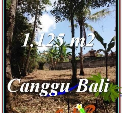 Affordable PROPERTY Canggu Pererenan BALI LAND FOR SALE TJCG208
