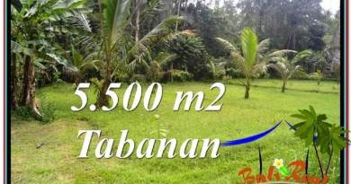 LAND IN Tabanan Penebel BALI FOR SALE TJTB295