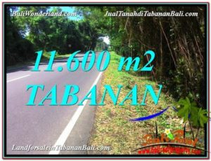 Affordable Tabanan Selemadeg BALI 11,600 m2 LAND FOR SALE TJTB327