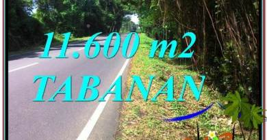 Affordable Tabanan Selemadeg BALI 11,600 m2 LAND FOR SALE TJTB327