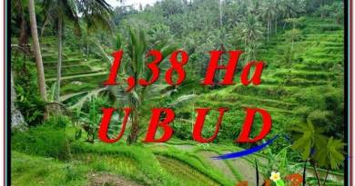 FOR SALE Affordable 13,800 m2 LAND IN UBUD TJUB590