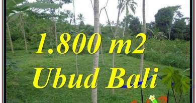 Affordable LAND FOR SALE IN Ubud Tegalalang BALI TJUB610