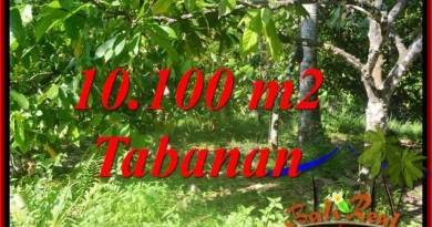 Magnificent PROPERTY 10,100 m2 LAND IN Tabanan Selemadeg Barat BALI FOR SALE TJTB360