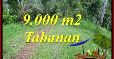 Affordable PROPERTY LAND FOR SALE IN Tabanan Selemadeg Timur BALI TJTB364