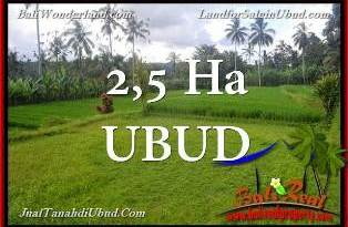 Affordable 25,000 m2 LAND IN UBUD BALI FOR SALE TJUB655
