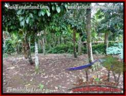 Affordable LAND SALE IN Ubud Tegalalang BALI TJUB489