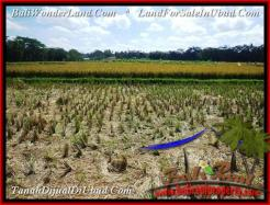 Affordable 2,800 m2 LAND IN UBUD BALI FOR SALE TJUB498