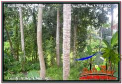 Exotic PROPERTY SENTRAL UBUD BALI 4,500 m2 LAND FOR SALE TJUB675