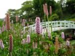 Trebah Garden