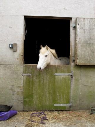 Auch das Pferd fühlt sich hier sehr wohl.