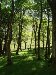 Wandern durch den Glenveagh National Park