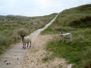 Wanderung auf Melmore Head
