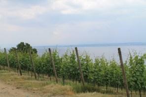 Weinkundeweg