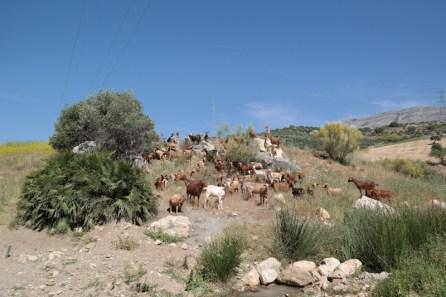 Wandertour von El Chorro nach Álora
