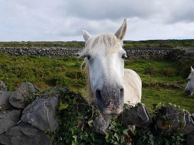 Gelassenheit auf Inishmore