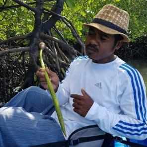 Odd erklärt uns, wie die Fortpflanzung der Mangroven funktioniert