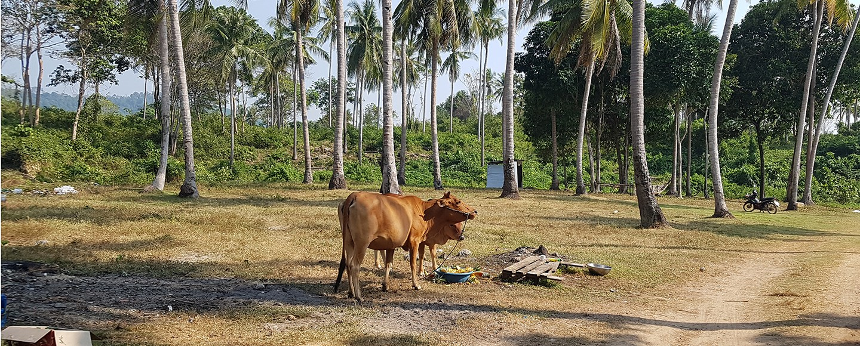 Thailand entdeckt die Nachhaltigkeit
