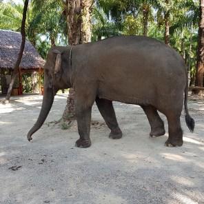 Landlinien_Top10_Krabi_Elephant_05