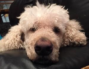 LEN - dog miracles