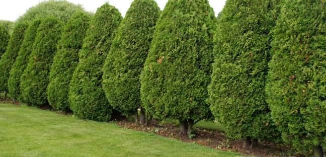 Lebensbaum  Garten  Landmenschen